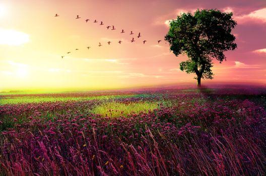Photo free landscape, field, art