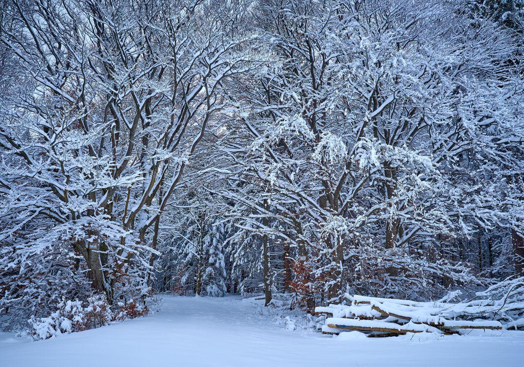 зимний лес · бесплатная заставка