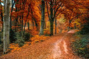 Фото бесплатно Парк, золотая осень, природа