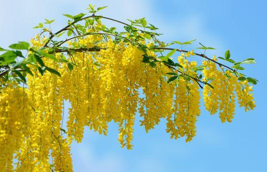 Фото бесплатно веточка, красиво, желтая