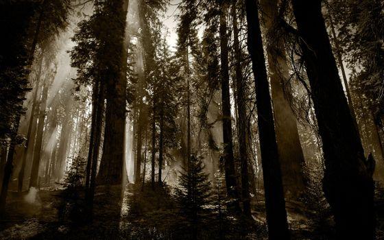 Фото бесплатно темно, туман, лес