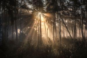 Бесплатные фото forest,mist,trees,sunrise,grass