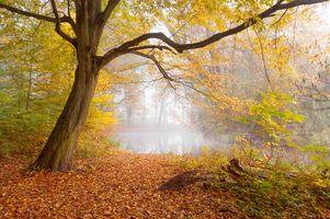 Фото бесплатно лес, туман, пруд