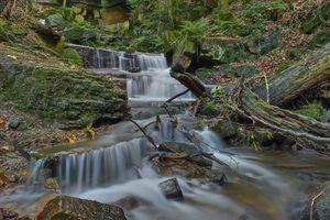 Фото бесплатно веточки, природа, ручей