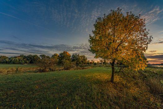 Photo free pond, autumn, tree