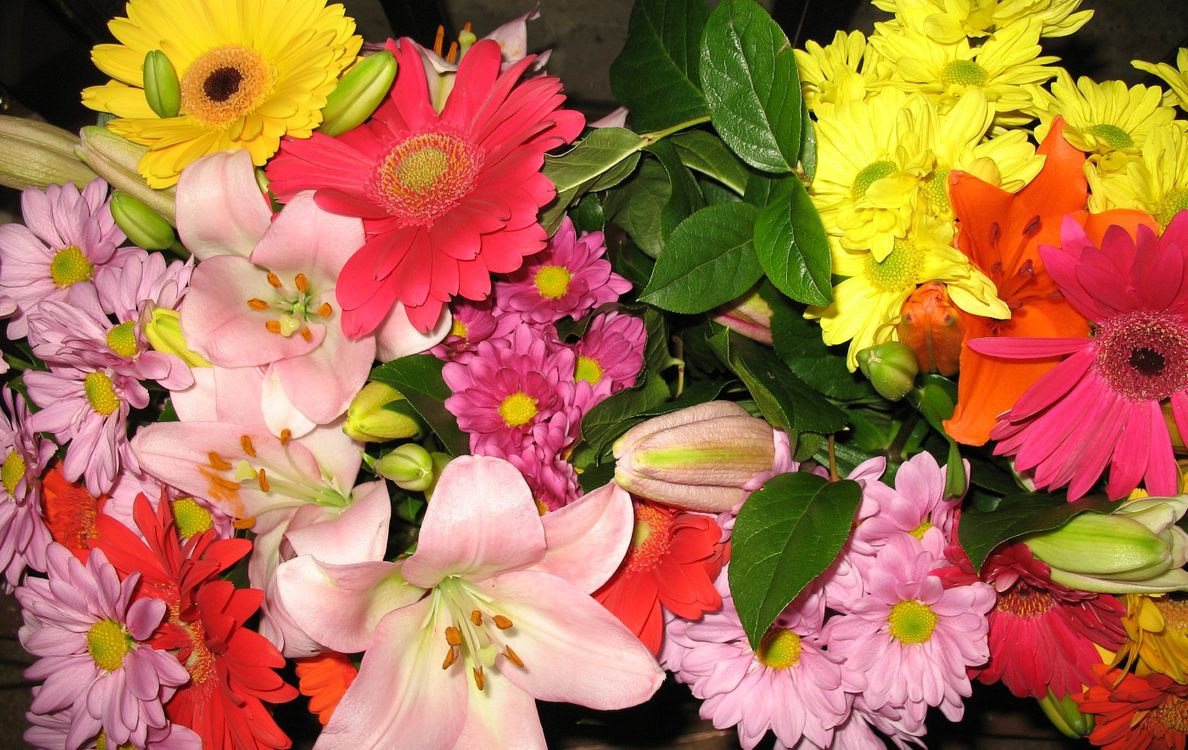 Листья цветов · бесплатное фото