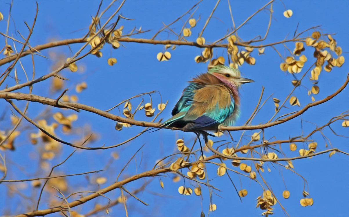 Фото милое животное птица - бесплатные картинки на Fonwall
