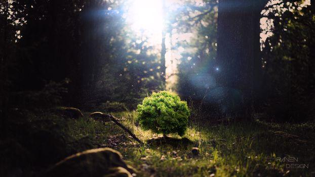 Маленькое дерево под лучами солнца