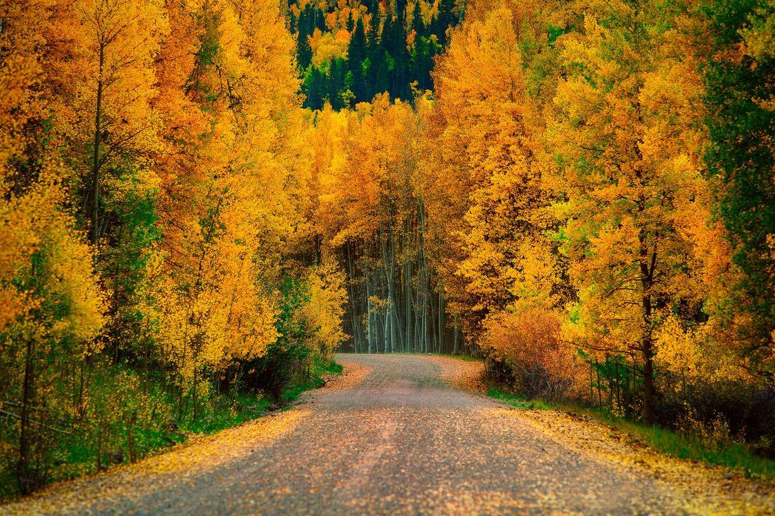 Начало леса · бесплатное фото