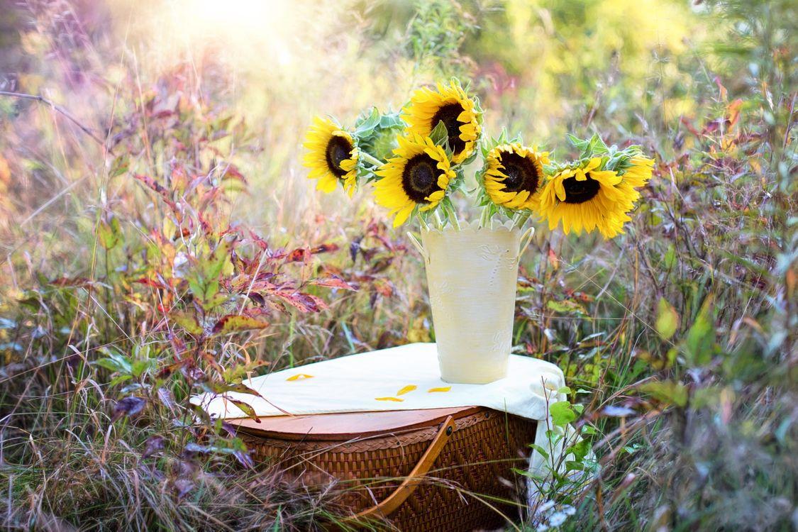 Фото бесплатно подсолнух, подсолнухи, цветы, флора, букет, ваза, поле, цветы