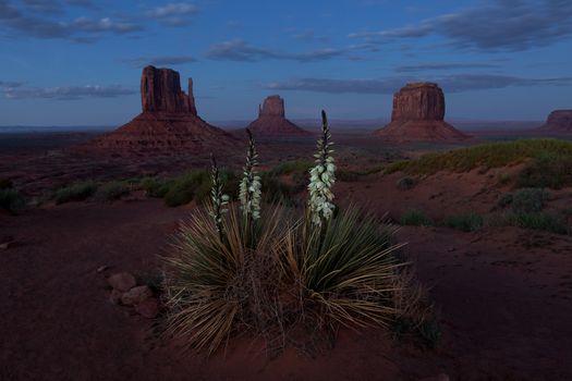 Цветение колючки в Долине монументов · бесплатное фото