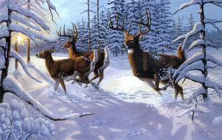 Бесплатные фото зима,олени,лес,деревья,природа,пейзаж,изобразительное искусство