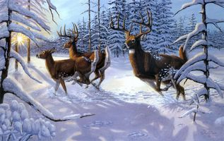 Photo free fine art, winter, deer