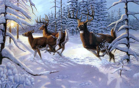 Бесплатные фото зима,олени,лес,деревья,природа,пейзаж,изобразительное искусство,картина
