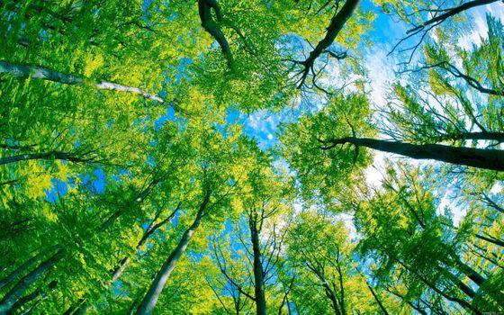 Заставки облака,лес,небо,деревья,ветви,стволы