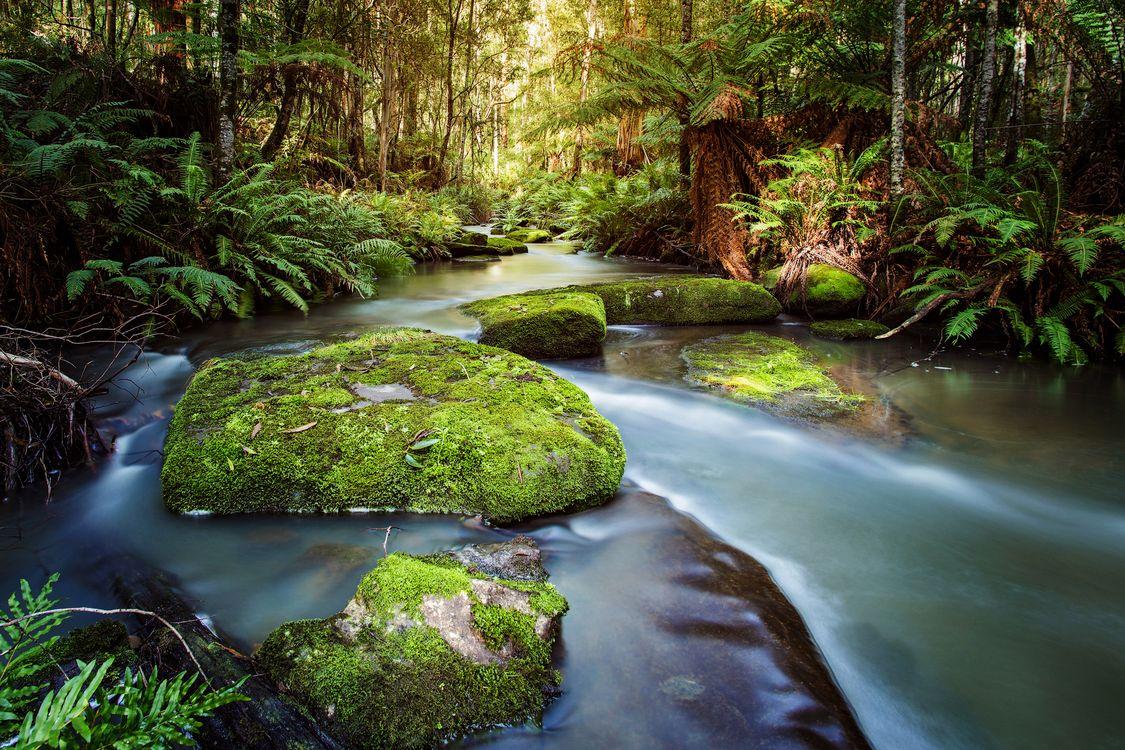 Фото бесплатно Виктория Австралия, Шоак Крик, лес, река, деревья, пейзаж, природа