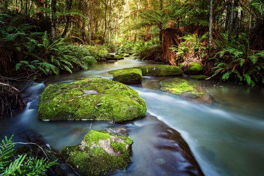 Бесплатные фото Виктория Австралия,Шоак Крик,лес,река,деревья,пейзаж