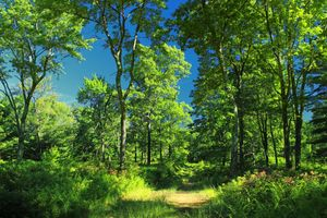 Заставки Уютное место в лесу, дорога, лес