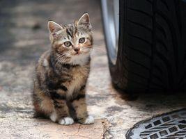 Котёнок позирует на дороге