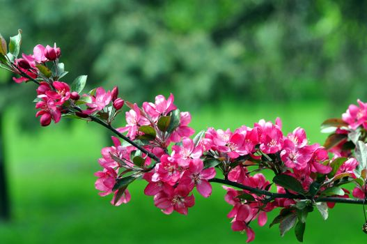 Photo free spring, flowering, flowering branch