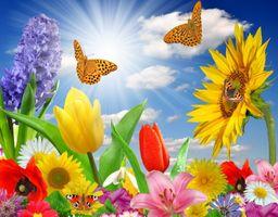 Фото бесплатно бабочка, цветы, небо