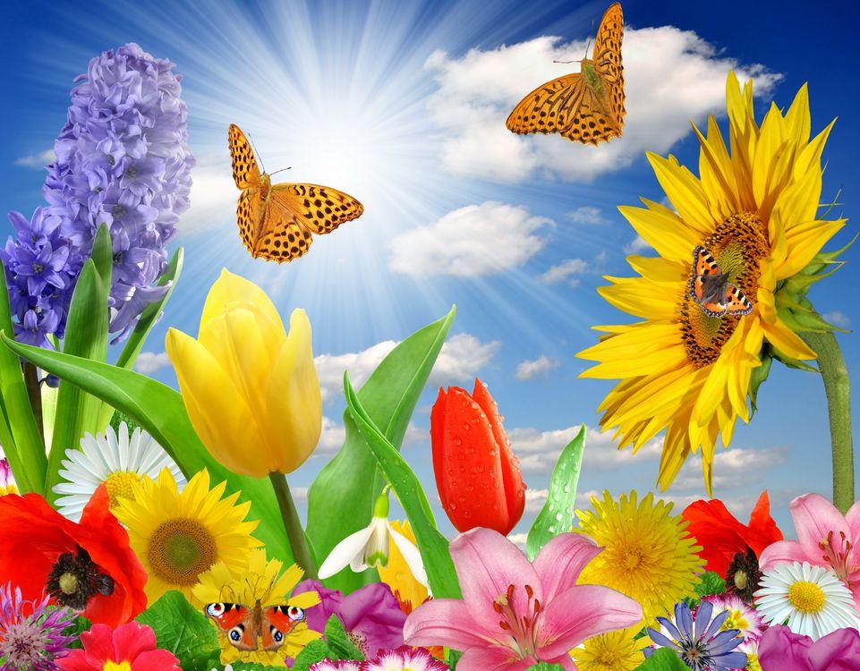 Фото бесплатно бабочка, цветы, небо - на рабочий стол