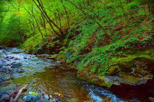 Фото бесплатно пейзаж, волшебная река, деревья