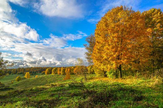 Фото бесплатно Октябрь в Царицыно, осень, Царицыно музей-заповедник, парк, усадьба, Москва, Россия, краски осени, осень в Москве, осенние листья, природа, пейзаж