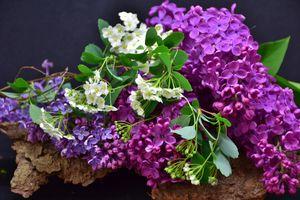 Фото бесплатно полный расцвет, сиреневый, макро