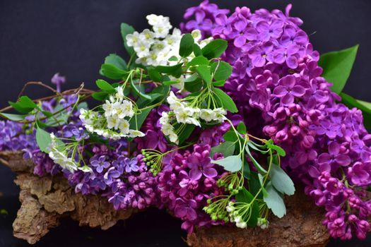 Photo free full flowering, lilac, close up
