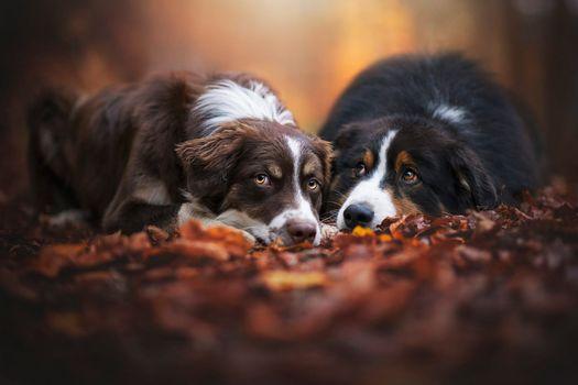 Друзья по осени