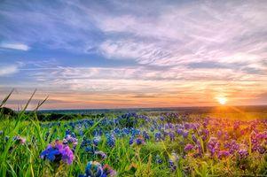Photo free nature, flowers, blossom