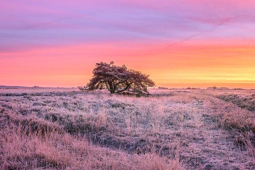 Фото бесплатно мороз, одинокое дерево, пейзаж