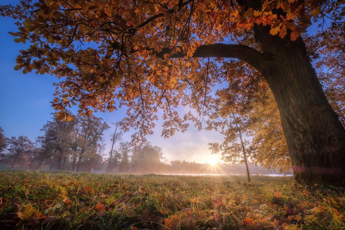 Фото бесплатно Золотая осень в Царском Селе, Россия, Санкт-Петербург - на рабочий стол