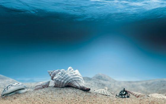 Фото бесплатно океан, раковина, искусство