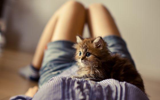 Фото бесплатно младенцы, дети, кошки