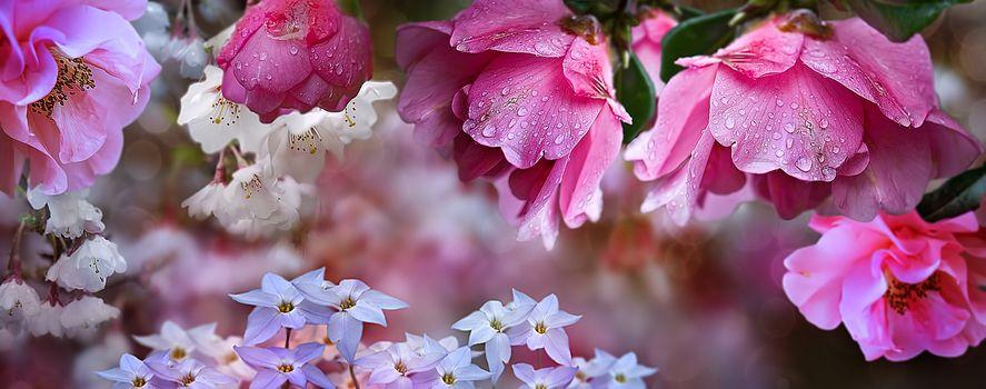 Белые и розовые цветочки