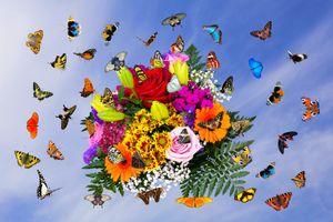 Заставки букет, оригинальный, цветы