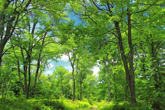 Photo free Beautiful nature, forest, nasyshennost