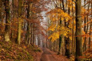 Осенняя лесная дорога среди деревьев и листопада