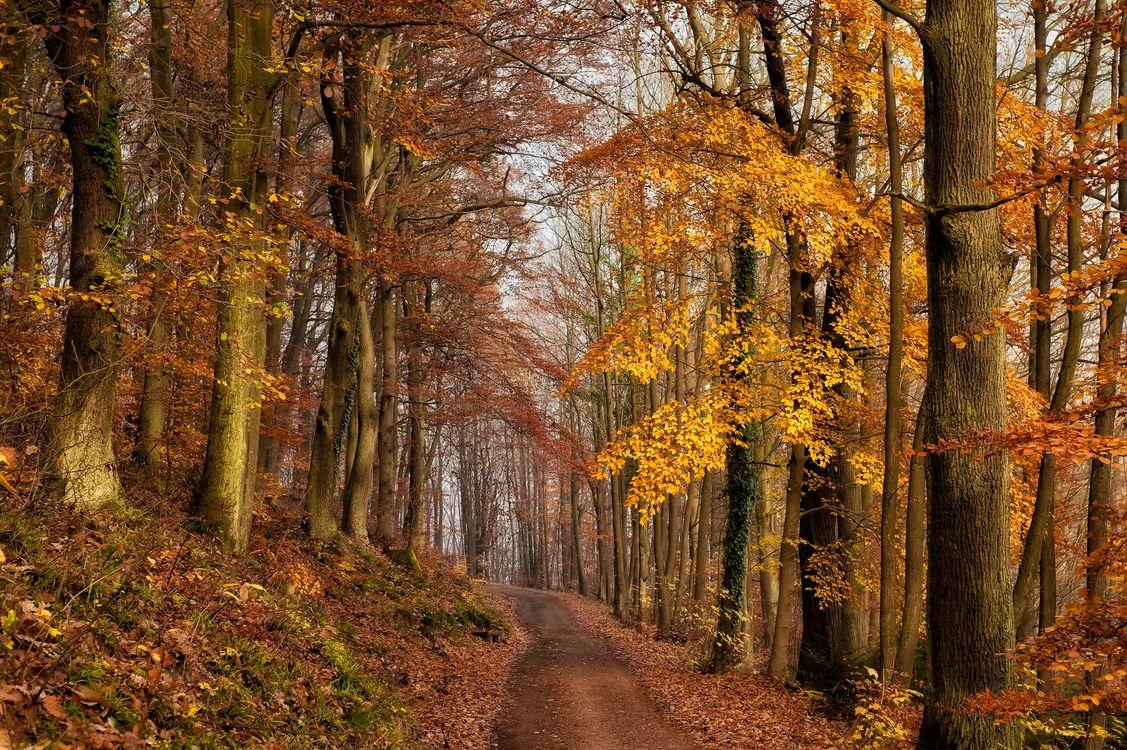 Осенняя лесная дорога среди деревьев и листопада · бесплатная заставка