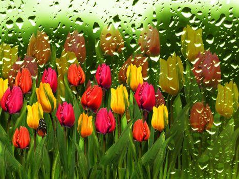 Бесплатные фото тюльпаны,бабочка,цветы,стекло,капли,флора
