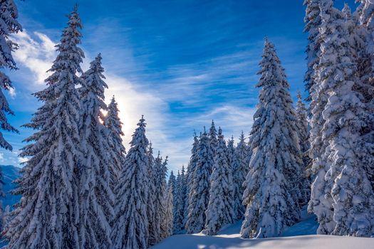 Winter Salzburg and Christmas trees - free photo