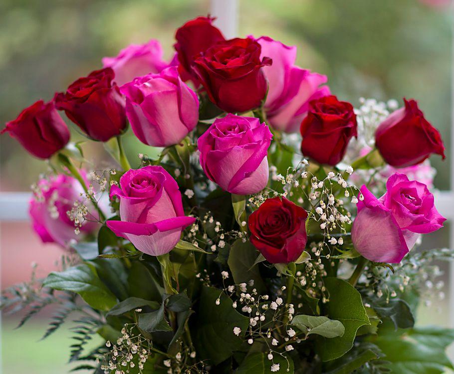 Фото бесплатно розы, флора, цветочная композиция - на рабочий стол