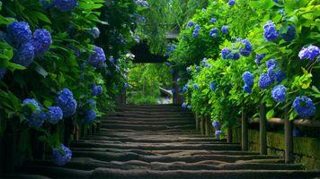 Фото бесплатно арка, сад, ворота, растения, лестницы