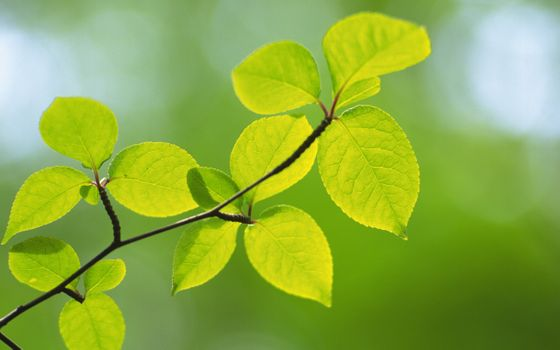 Заставки листья, макро, размытый
