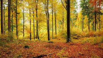 Заставки осенние листья, цвета осени, парк