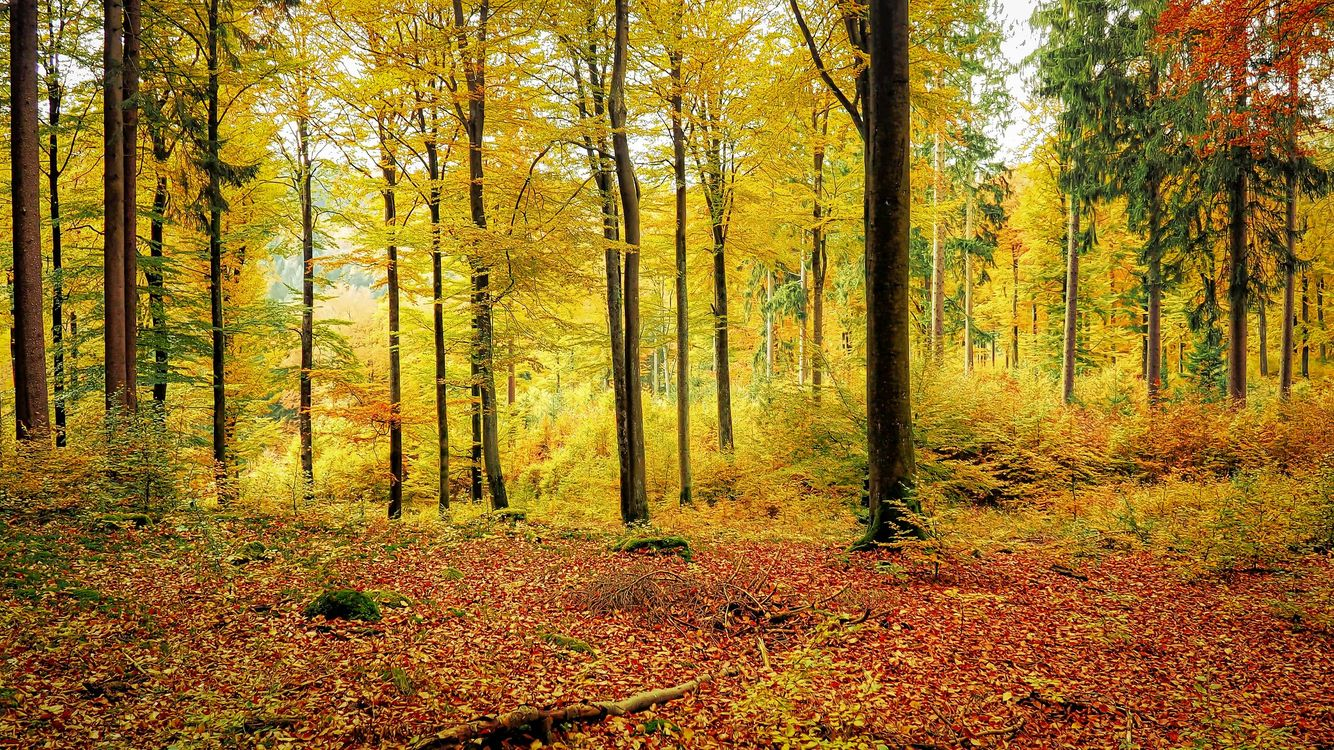 Photos for free autumn leaves, fall colors, Park - to the desktop