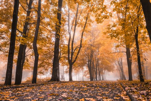 Fog in autumn park · free photo