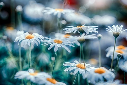 Photo free chamomile, flowers, flora